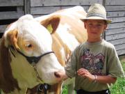 åbenrå-2006-dyrskue-dreng-med-simmental