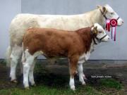 landsskuet-2007-7b
