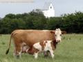 gmd001-sneumgaard-juli-2008-35