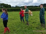 Kilbride Farm Simmentals (16)