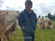 Kilbride Farm Simmentals (3)