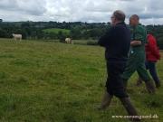 Kilbride Farm Simmentals (40)