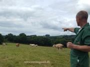 Kilbride Farm Simmentals (41)
