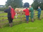 Kilbride Farm Simmentals (7)