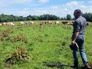 clonagh herd (2)