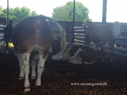 clonagh herd (3)