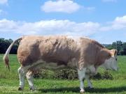 clonagh herd (7)