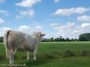 clonagh herd (8)