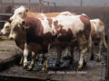 ontour024-sneumgaard-i-oestrig-2011-171