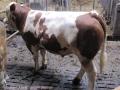 ontour025-sneumgaard-i-oestrig-2011-151