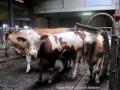 ontour027-sneumgaard-i-oestrig-2011-131
