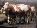 ontour054-sneumgaard-i-oestrig-2011-17