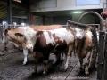 ontour057-sneumgaard-i-oestrig-2011-13