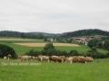 ontour062-sneumgaard-i-oestrig-2011-1