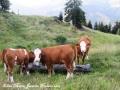 ontour099-sneumgaard-tour-2012-06