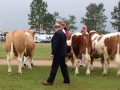 judge-ian-green-simmental-judge-denmark-2014