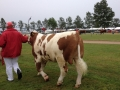 national-show-2014-03