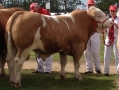 national-show-2014-04