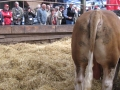 Simmental World Congress 2008 (128)