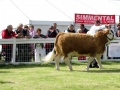 Simmental World Congress 2008 (13)