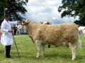 Simmental World Congress 2008 (15)
