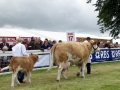 Simmental World Congress 2008 (16)