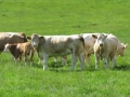 Simmental World Congress 2008 (167)