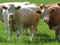 Simmental World Congress 2008 (168)