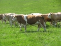Simmental World Congress 2008 (169)