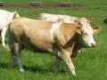 Simmental World Congress 2008 (175)