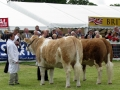 Simmental World Congress 2008 (18)