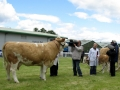 Simmental World Congress 2008 (19)