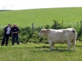 Simmental World Congress 2008 (199)
