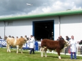 Simmental World Congress 2008 (20)