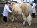 Simmental World Congress 2008 (22)