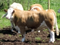 Simmental World Congress 2008 (269)
