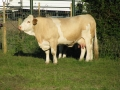 Simmental World Congress 2008 (330)