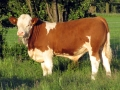 Simmental World Congress 2008 (359)