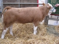 Simmental World Congress 2008 (380)