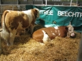 Simmental World Congress 2008 (385)