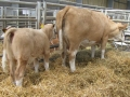 Simmental World Congress 2008 (392)