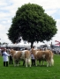 Simmental World Congress 2008 (395)