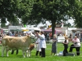 Simmental World Congress 2008 (399)