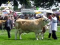 Simmental World Congress 2008 (400)