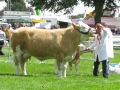 Simmental World Congress 2008 (402)