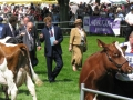 Simmental World Congress 2008 (403)