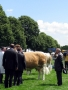 Simmental World Congress 2008 (411)