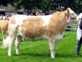 Simmental World Congress 2008 (415)