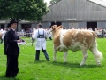 Simmental World Congress 2008 (416)