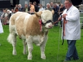 Simmental World Congress 2008 (417)